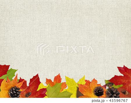 背景-秋-落ち葉-木の実 43596767