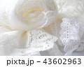 白い毛糸だま 43602963