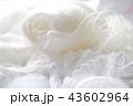 白い毛糸だま 43602964