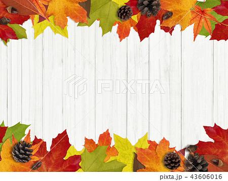 背景-秋-落ち葉-木の実-フレーム 43606016