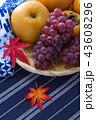 秋の果物 (葡萄,柿,梨) 43608296