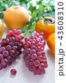 秋の果物 (葡萄,柿,梨) 43608310