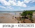 風景 自然 マングローブの写真 43613635