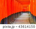 伏見稲荷大社 神社 鳥居の写真 43614150