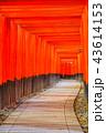 伏見稲荷大社 神社 鳥居の写真 43614153