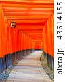 京都 伏見稲荷大社 鳥居の写真 43614155
