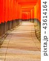 京都 伏見稲荷大社 鳥居の写真 43614164