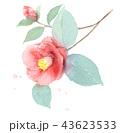 椿 43623533