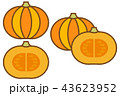 かぼちゃ_茶ライン 43623952