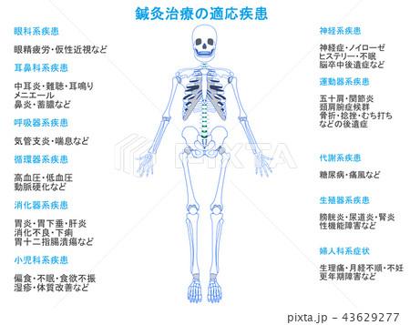 鍼灸治療の適応疾患図 骨格2(青色・説明あり) 43629277