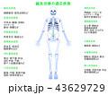 鍼 適応疾患 疾患のイラスト 43629729