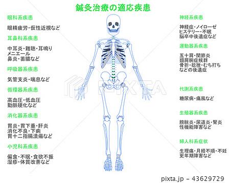 鍼灸治療の適応疾患図 骨格4(緑色・説明あり) 43629729