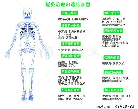 鍼灸治療の適応疾患図 骨格3(緑色・説明あり) 43629733