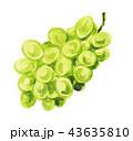 果物 ぶどう マスカットのイラスト 43635810