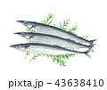 秋刀魚 魚 秋の味覚のイラスト 43638410