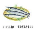秋刀魚 魚 秋の味覚のイラスト 43638411