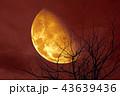 half blood moon back silhouette tree and night sky 43639436