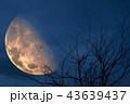 half blood moon back silhouette tree and night sky 43639437