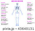 鍼 説明図 適応疾患のイラスト 43640131