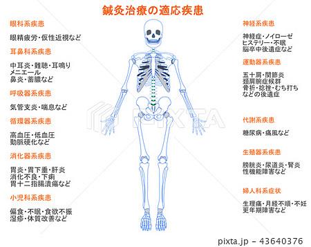 鍼灸治療の適応疾患図 骨格7(オレンジ色・説明あり) 43640376