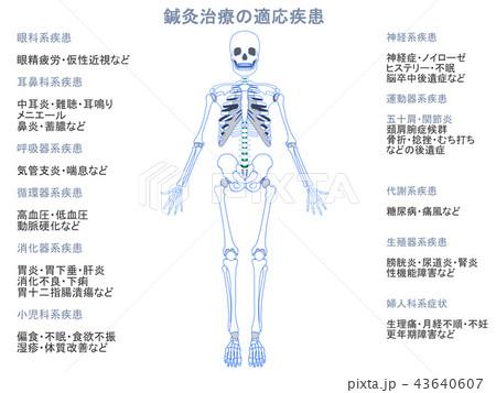 鍼灸治療の適応疾患図 骨格10(グレー色・説明あり) 43640607