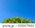 青空イメージ 43647944