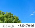 青空イメージ 43647946
