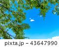 青空 イメージ  43647990