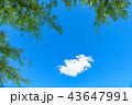 青空 イメージ  43647991