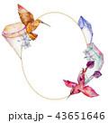 野生動物 野生生物 コリブリのイラスト 43651646
