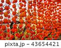 (山梨県)ころ柿の里・枯露柿 43654421