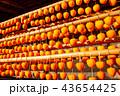 (山梨県)ころ柿の里・枯露柿 43654425