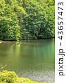 夏 御射鹿池 池の写真 43657473