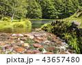 夏 御射鹿池 池の写真 43657480