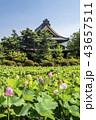 蓮 花 信濃国分寺の写真 43657511