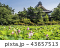 蓮 花 信濃国分寺の写真 43657513