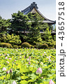 蓮 花 信濃国分寺の写真 43657518