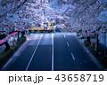 【東京の桜】 早朝・西武線・踏切り 43658719