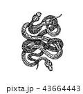 ヘビ 蛇 へびのイラスト 43664443