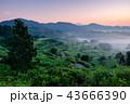 星峠の棚田 (朝景) 43666390
