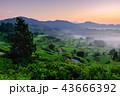 星峠の棚田 (朝景) 43666392