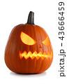 かぼちゃ カボチャ 南瓜の写真 43666459