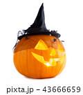 ハロウィン かぼちゃ カボチャの写真 43666659