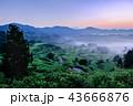星峠の棚田 (朝景) 43666876