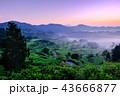 星峠の棚田 (朝景) 43666877