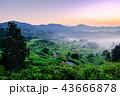 星峠の棚田 (朝景) 43666878
