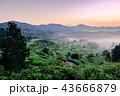 星峠の棚田 (朝景) 43666879