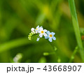 Flower growing in the meadow at summer, close up 43668907