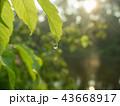Waterdrop hanging on green leaf, close up shot 43668917