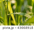 Close up view on green plant with dewdrops on its 43668918